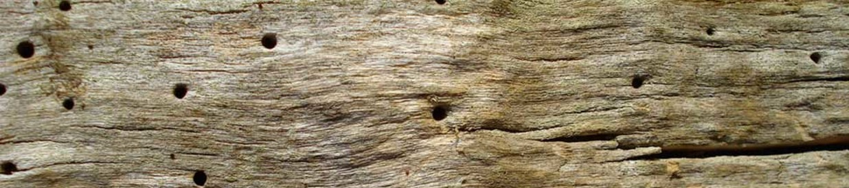 Carcoma cpd control de plagas - Tratamiento carcoma madera ...
