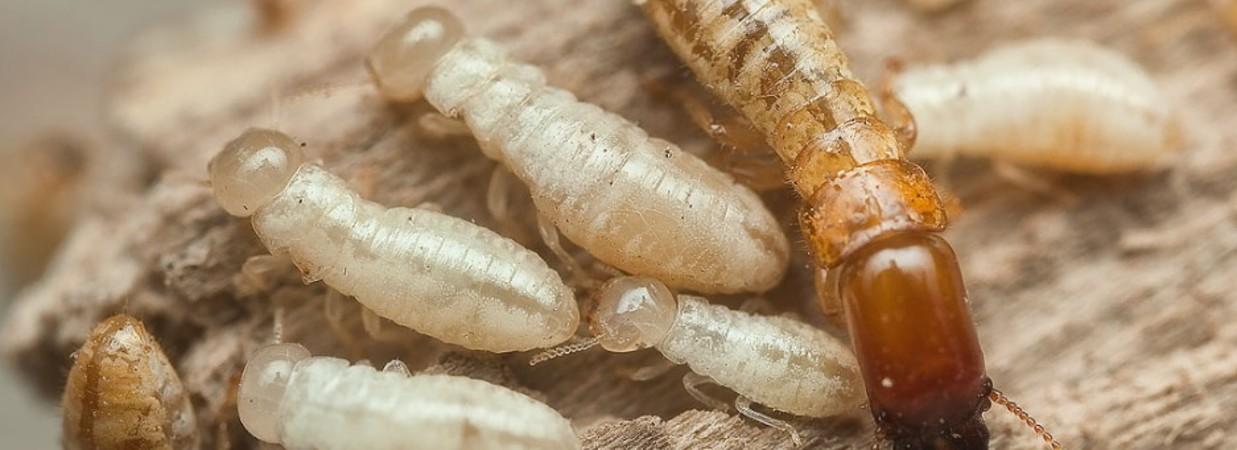 Termitas teruel cpd plagas teruel - Acabar con las termitas ...